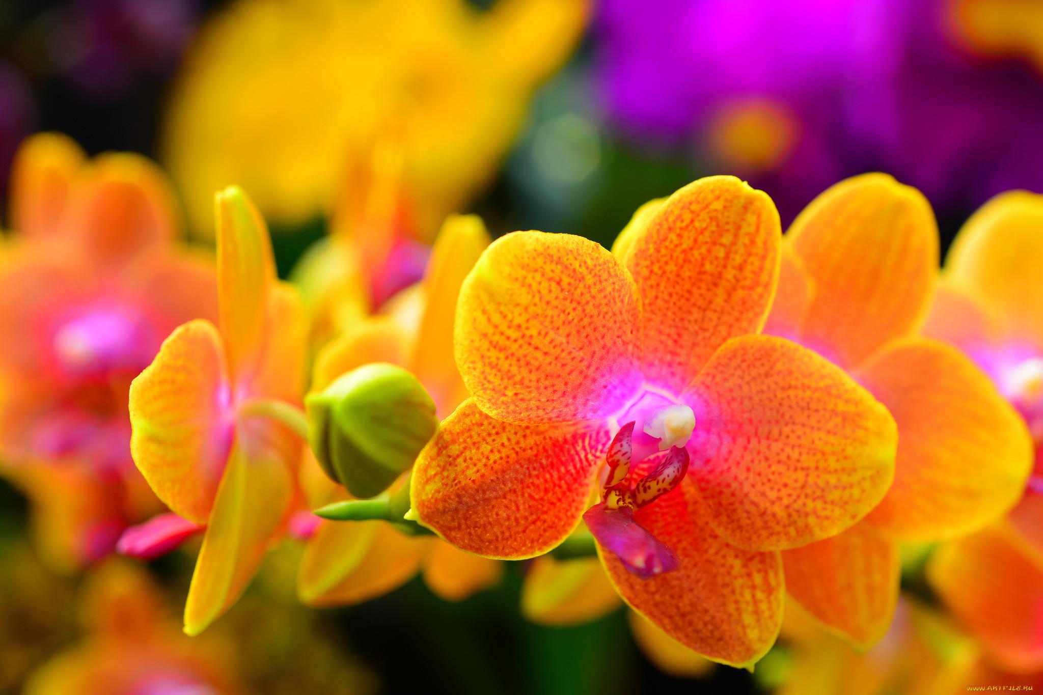 фото цветов для печати высокого качества копилке больше